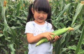 7/14(日) 旬野菜にふれる みんなで楽しむ「農家で休日vol.2」